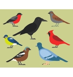 Set of flat birds isolated on background vector image
