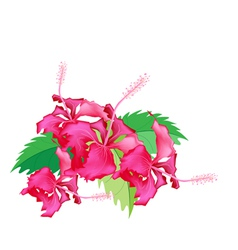 A Stack of Fresh Red Hibiscus Flowers vector