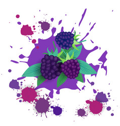 Blackberry fruit logo watercolor splash design vector