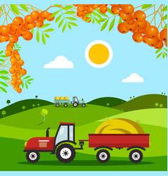 autumn harvest field meadow with tractors hills vector image