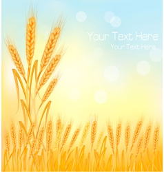 background wheat ears vector image