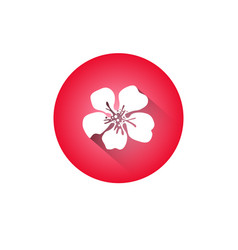 cherry blossom icon japanese sakura flower vector image