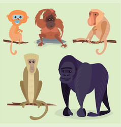 Different breads monkey character animal wild zoo vector