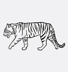 Tiger mammal animal sketch vector