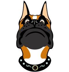 cartoon boxer head vector image vector image