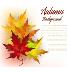 Autumn Frame With Leaves vector image