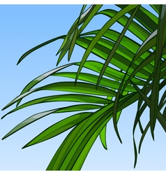 background of sky with palm leaves vector image