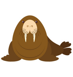 Sea lion on white background vector