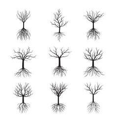 Set trees without leafs vector