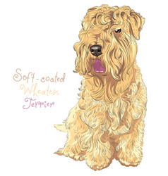 soft-coated wheaten terrier dog vector image