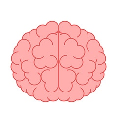 Brain isolated on white vector image vector image