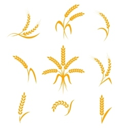 Abstract wheat ears icons vector image