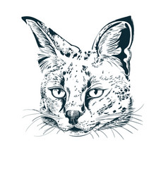 Hand drawn sketch serval on white vector