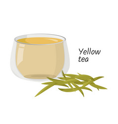 Hot yellow tea in glass cup and a handful tea vector