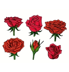 red beautiful roses vector image