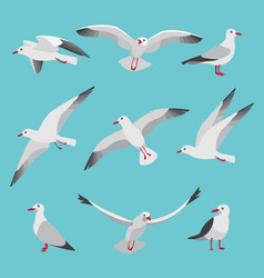 Set of atlantic seagulls in cartoon vector