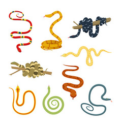 pictures of colored reptiles poisonous snakes vector image