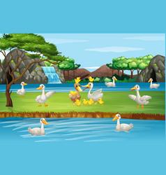 Scene with ducks pond vector