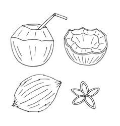 set hand drawn doodle sketch coconut vector image