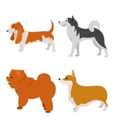 Set of dogs alaskan malamute and basset vector image