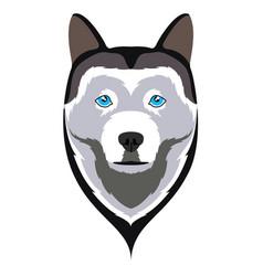 Siberian husky avatar vector