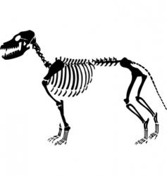 dog skeleton vector image