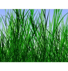 grass jungle vector image