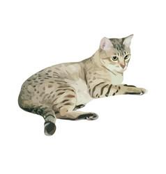 Australian mist cat breed vector