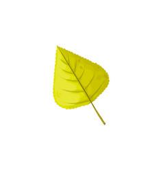 Autumn birch leaf icon cartoon foliage vector