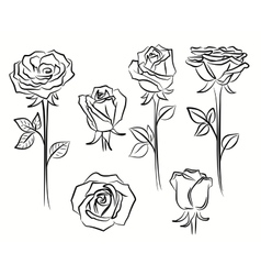beautiful roses flower vector image