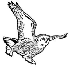 snow owl black white vector image vector image