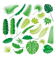 Tropical Leaves Collection isolate Big vector image vector image