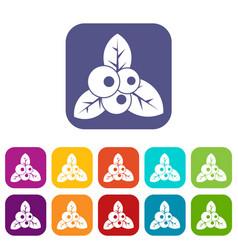 Cranberry icons set vector