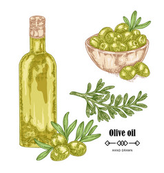 Hand drawn olive branch and olive oil in glass vector