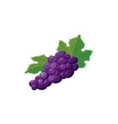 Bunch of blue grapes icon cartoon style vector