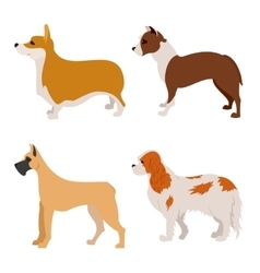 Collection of purebred dogs flat design vector image