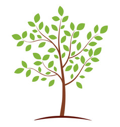 green tree icon vector image