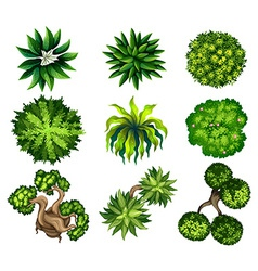 Topview of the different plants vector image