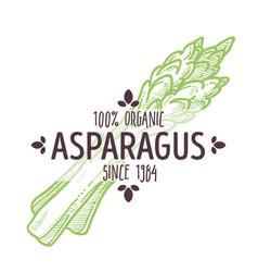 Asparagus vegetable organic food and veggies vector