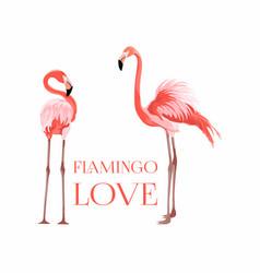 Exotic pink flamingo birds couple beal to beak vector