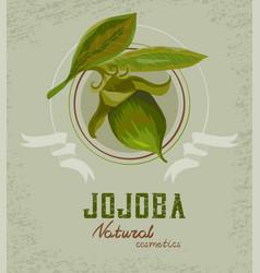 Jojoba plant logo vector