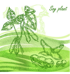 Soy plant set hand drawn soy beans on watercolor vector