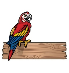 red macaw bird vector image