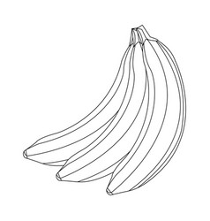 banana fruit delicious nutrition image outline vector image