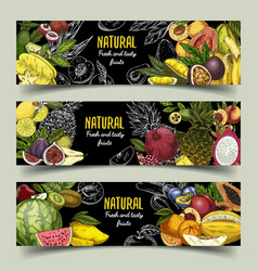 Badges or banners with exotic fruits vector