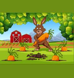 Bunny with carrots farm scene vector