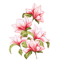 Magnolia flower in beautiful blossom vector