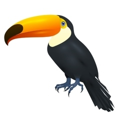 Toco Toucan Isolated On White Background vector image