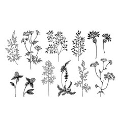 wild and herbs plants set outline silhouette and vector image