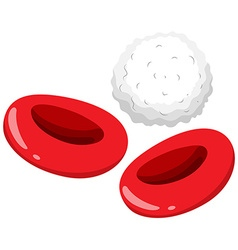 Red and white blood cells vector image